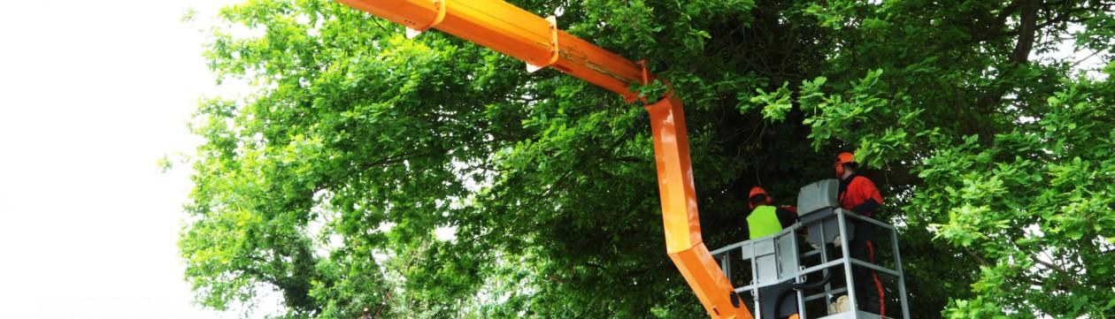 Ausgefahrene Hubarbeitsbühne im Baum