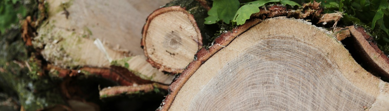 Frisch geschnittenes Holz